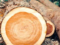 """心と体を癒す、生きた""""樹""""の素材を導入。"""